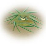 Chaudoudoux et Froids-piquants pour exprimer ses émotions
